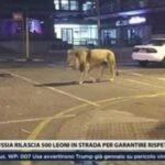 leone in strada